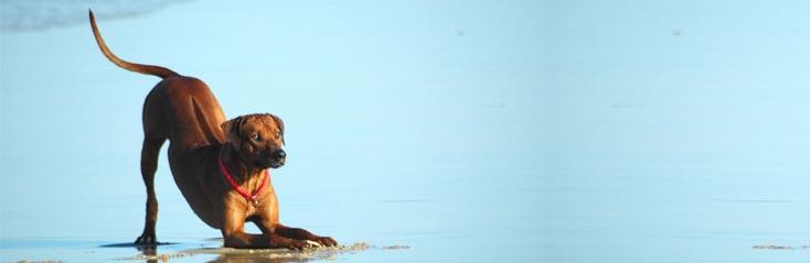 Het verzorgen van je hond-Dierenzorg-Thuisstudie